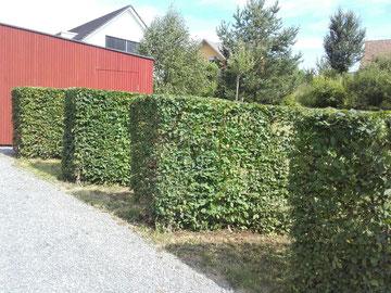 Schnitt von Pflanzen