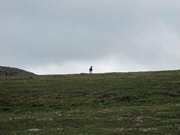 Der erste Spaziergang in die Berge