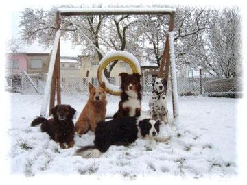 Das waren die ersten Fünf (v.l.n.r.: Toby, Stormy, Terry, Wummi, vorne: Rebel)
