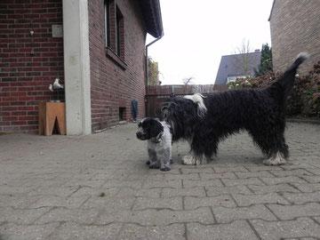 Linus: Schnüffel, schnüffel, den Geruch kenn ich irgendwoher!!!!