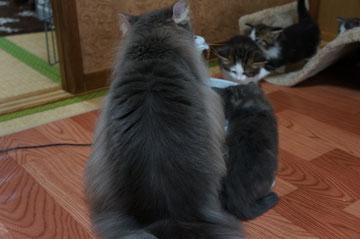 ルチア姫と子ニャン♪