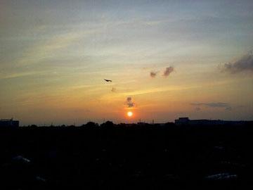 夕景に飛び立つ photo by 白鳥保美