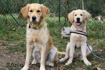 Lady Blue Schwarz (links) mit ihrem kleinen Bruder Barney Emerson Dunkelblau