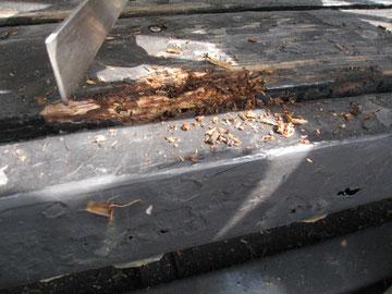 木部ケレン中。 腐食発見