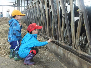 牛を間近に楽しむ子供たち
