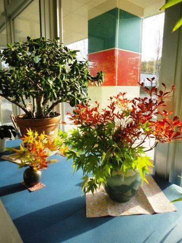 リアスの玄関を飾る綺麗な紅葉です