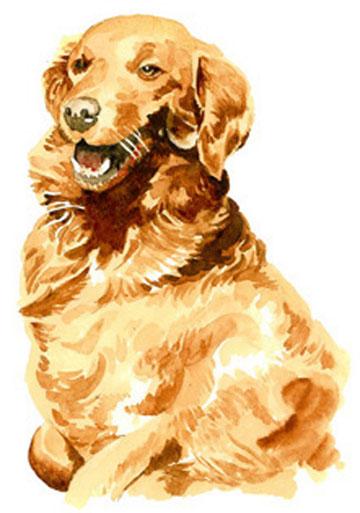 portrait d'un chien à l'arrêt