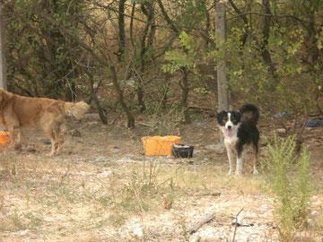 Angekettet in den Büschen, der schwarz-weiße Hund lebt seit Mai dort.