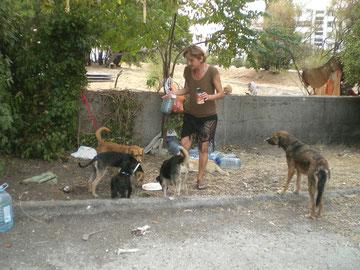 Stadtwiese in Bar, eine Einheimische kommt tägl. mit Wasser u. etwas Futter