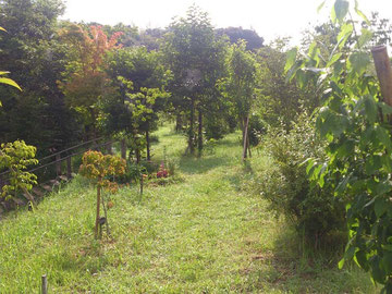 木々が力みなぎり伸びています。第二樹木葬地