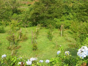 紫陽花が彩る第一樹木葬地