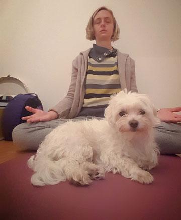 Sukhi kennt die neue Gewohnheit auch schon. Er kommt sofort dazu, wenn ich mir mein Meditationskissen richte...