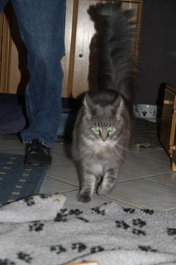 Cougar genau 1 Jahr alt 31.08.2010