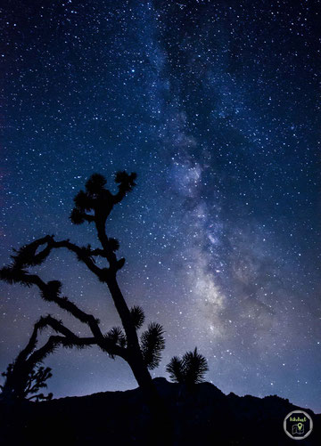 Die Milchstraße im Joshua Tree NP