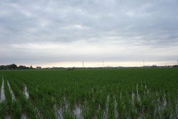 今日の夕方。久しぶりに雲が広がりました。明日は恵みの雨となるでしょうか