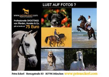 Pferdefotografie/Hundefotografie in Andalusien & Bayern