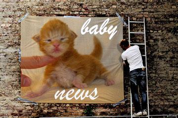мейн  кун,  кот  мейн  кун, кошка мейн кун, котята мейн кун,  мейн кун, котята мейн кун, купить мейн куна, рыжий котенок мейн кун,   рыжая кошечка мейн кун, кошки, коты, котята, питомник одесса,   фото мейн куна, maine coon, купить мейн куна одесса