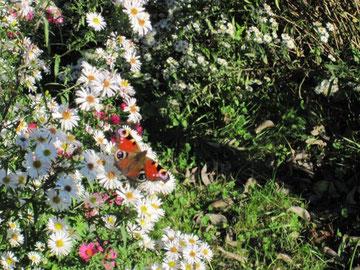 Noch am 26. Oktober konnte ich in unserem Garten so ein schönes Szenario einfangen...