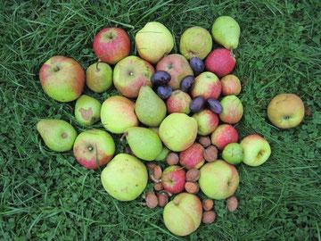 Buntes Erntestilleben aus Äpfeln, Birnen, Pflaumen und Walnüssen