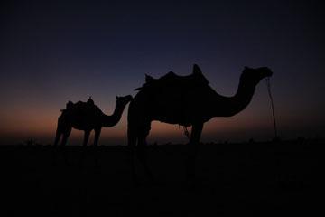 .... in der Wüste Thar