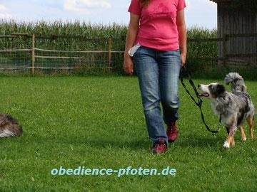 Juniorgruppe - Leinelaufen zwischen anderen Hunden