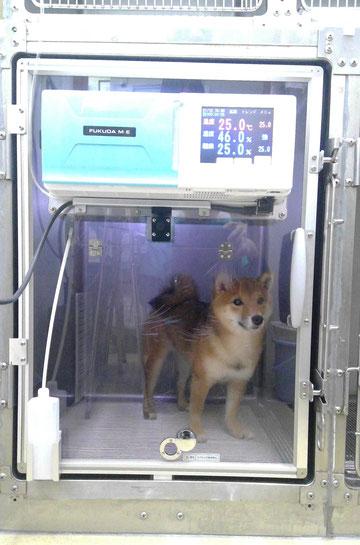 動物用ICU装置 DEAR-M11