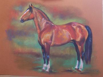 Pferd 50 &70