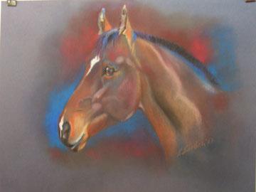 Pferde Portrait 50 & 70