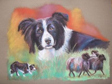 Hund bei der Arbeit mit Portrait