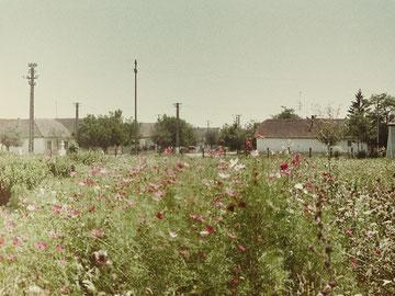 Vergessen, Fotografie, 1999