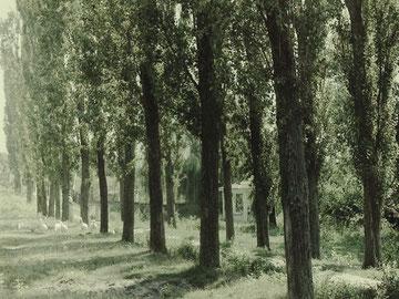 Spaziergang mit Gänsen, Fotografie, 1999