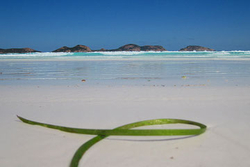 """Green Ribbon"" am Lucky Beach"