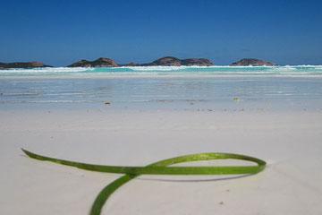 """""""Green Ribbon"""" am Lucky Beach"""