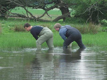 Synchronwaten als neue Frühjahrsdisziplin beim NABU - auf der Suche nach Laichballen des Laubfrosches.