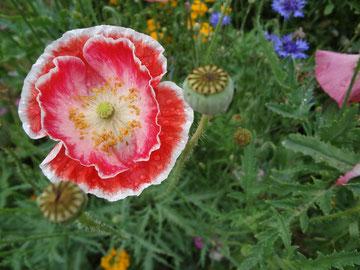 「アーサナは、プラーナエネルギーの開花である」Copyright by Kripalu Japan Ltd.