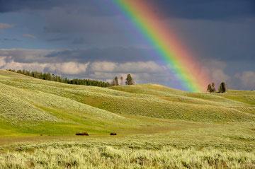 Die Rückkehr der Regenbogen-Kriegerinnen