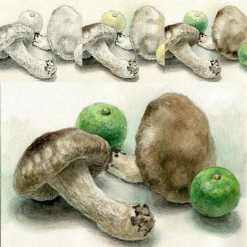 描き方プログラム・すだちと椎茸の水彩画4ステップガイド