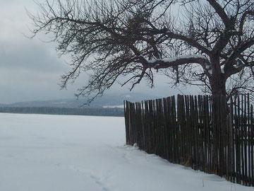 Müllers Garten im Februar