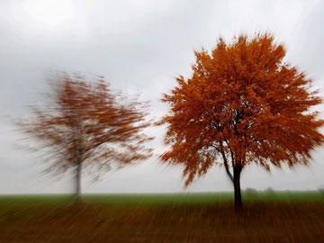 zwei Laubbäume, die wir gezoomt wirken