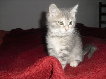 Hestia (3 mois)