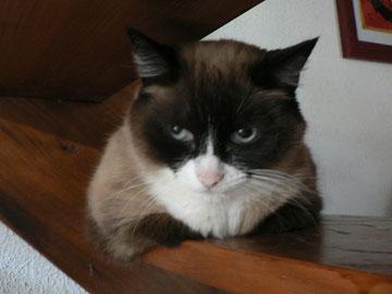 Mirabelle (10 ans)