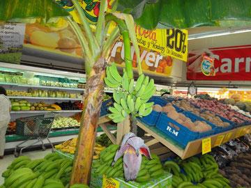Eine Bananenpflanze mit Fruchtfingern und Blüte im Supermark