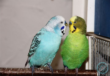 wir sind Spike und Ducky und gehören der Alex