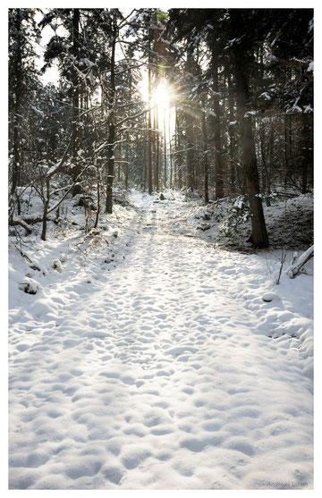 Winterwaldlicht | fotografiert 02-2013