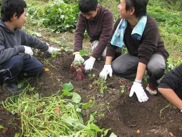 作務 収穫作業風景
