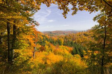 Herbststimmung am Rennsteig