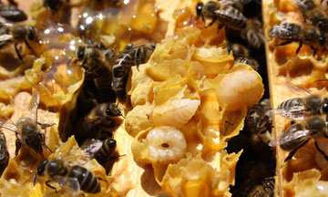 Bleiben die Bienen gesund, sind auch wir gesund.