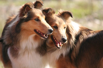 Ginger und Franci ein Dreamteam