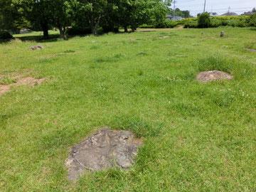 むさしの 武蔵国分寺跡の礎石