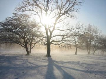 ▲雪が降った日 朝日に輝く木々